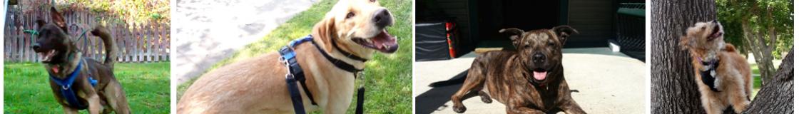 Z-dogs Blog